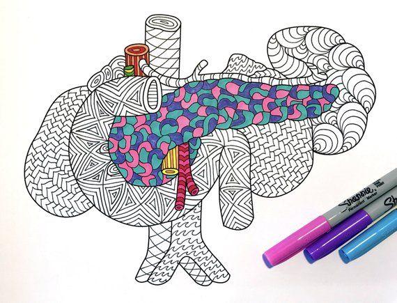 Pancreas and Spleen - Human Anatomy - PDF Zentangle ...