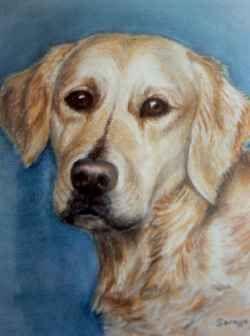 Pet Portraits in Pastel by Soraya