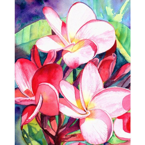 Original Watercolors Plumeria Paintings Tropical Flower Paintings 89 Liked On Polyvore Featuring Hom Tropical Painting Flower Painting Etsy Wall Art