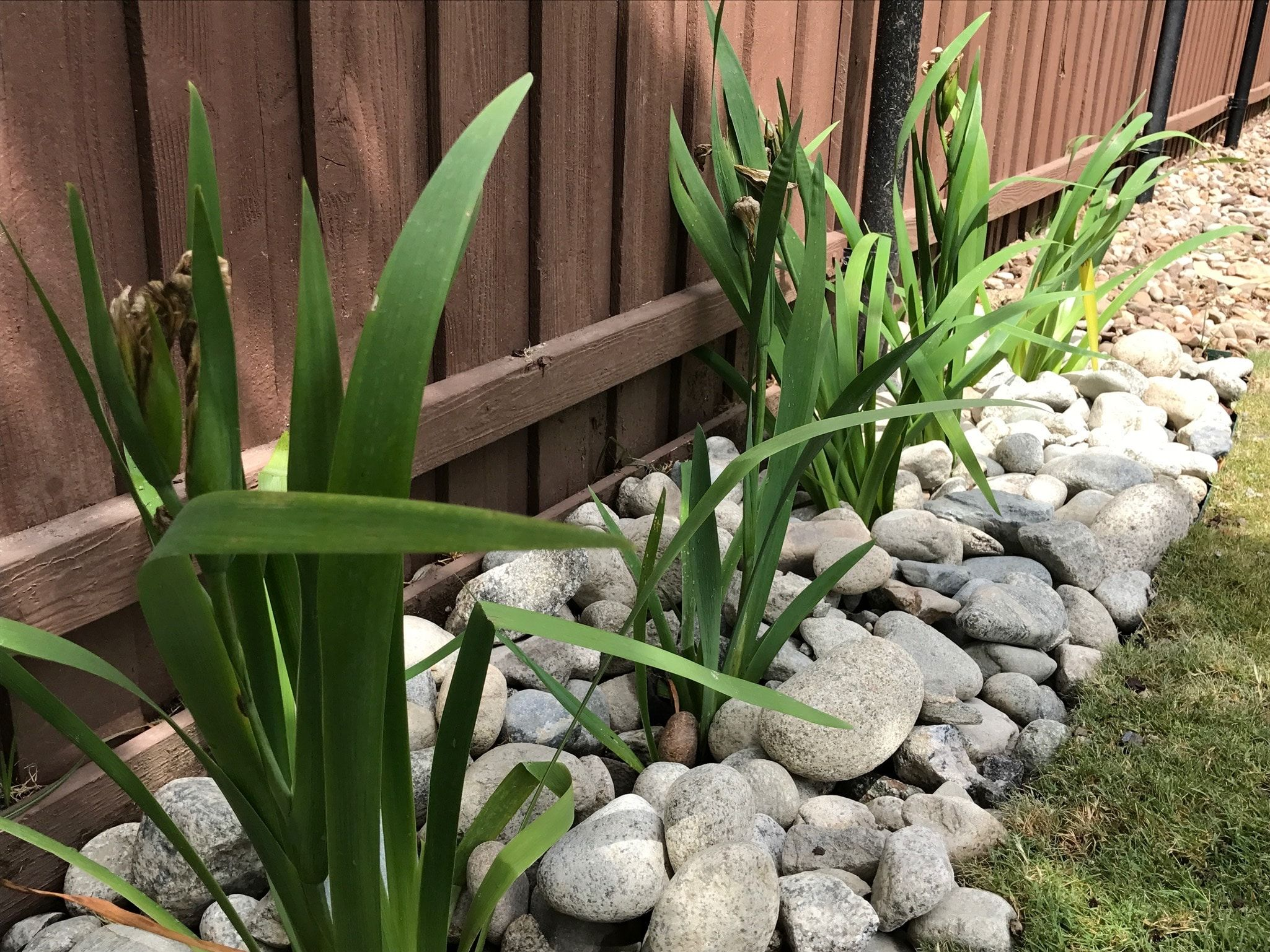 Flower Beds With Rocks Instead Of Mulch With Images 400 x 300