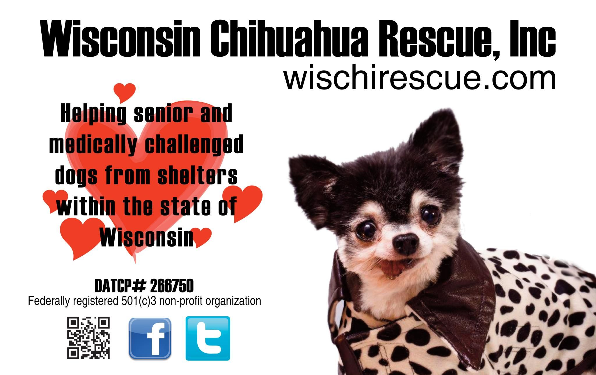 chihuahua rescue wisconsin wisconsin chihuahua rescue chihuahuas pinterest 5970