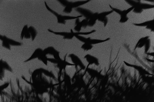 Masahisa Fukase, Kanazawa, from the series Solitude of Ravens, 1978