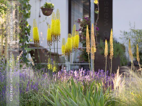Geniesser-Garten  Eremurus - Steppenkerze Garten Pinterest - kies garten gelb
