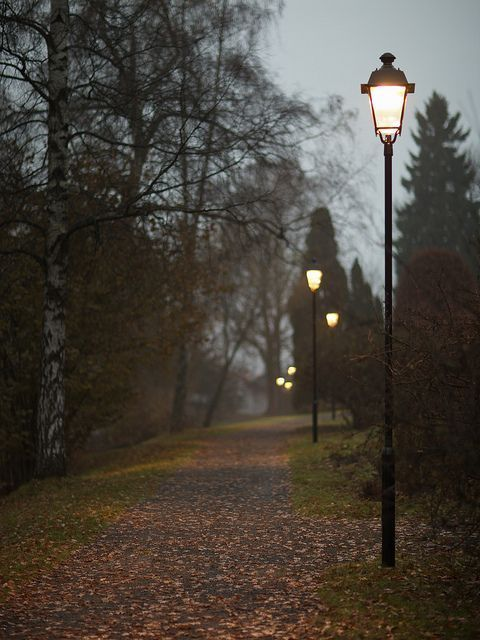 fallen leaves, pumpkin pies and cozy weather : Photo fallen...,  fallen leaves, pumpkin pies and co