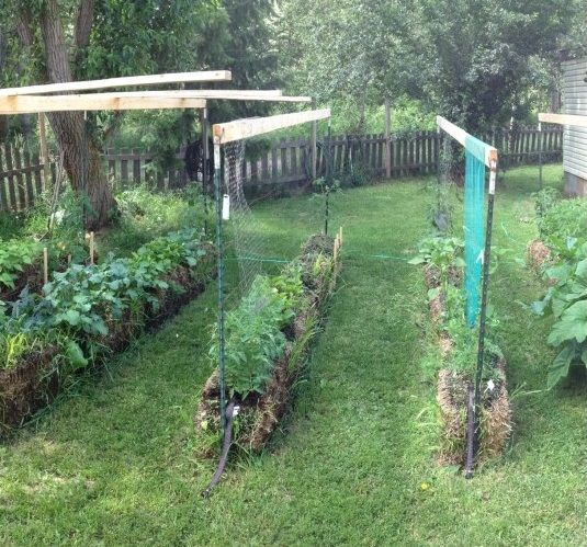 How To Grow 10 Foot Tall Tomato Plants In Straw Bales 400 x 300
