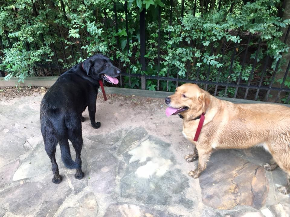 Suwanee, GA Photos of Lost & Found Pets of Gwinnett County