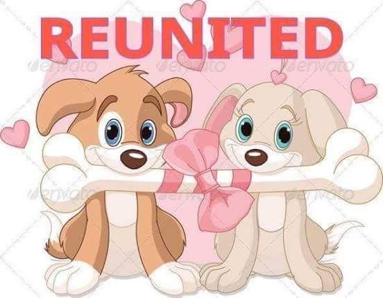 Pin By Glenis Morton On Reunited Dog Valentines Dog Illustration Cartoon Dog