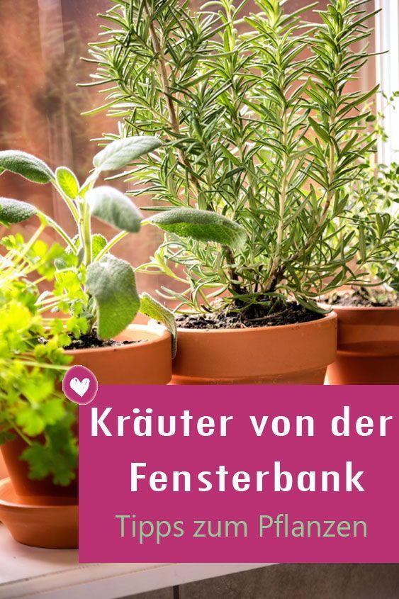 Kräuter auf der Fensterbank pflanzen: So einfach geht es #kräutergartenbalkon