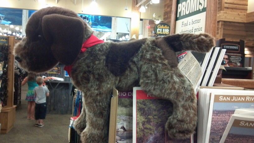 Stuffed German shorthaired pointer (like zoe) exclusively