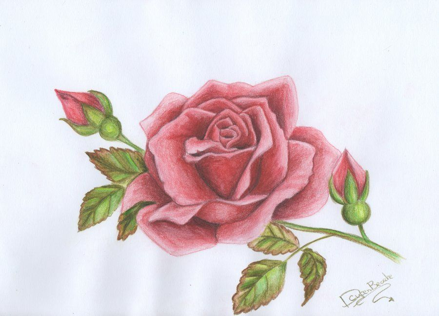 rose drawing tumblr - Buscar con Google | Alexa | Pinterest | Rose ...