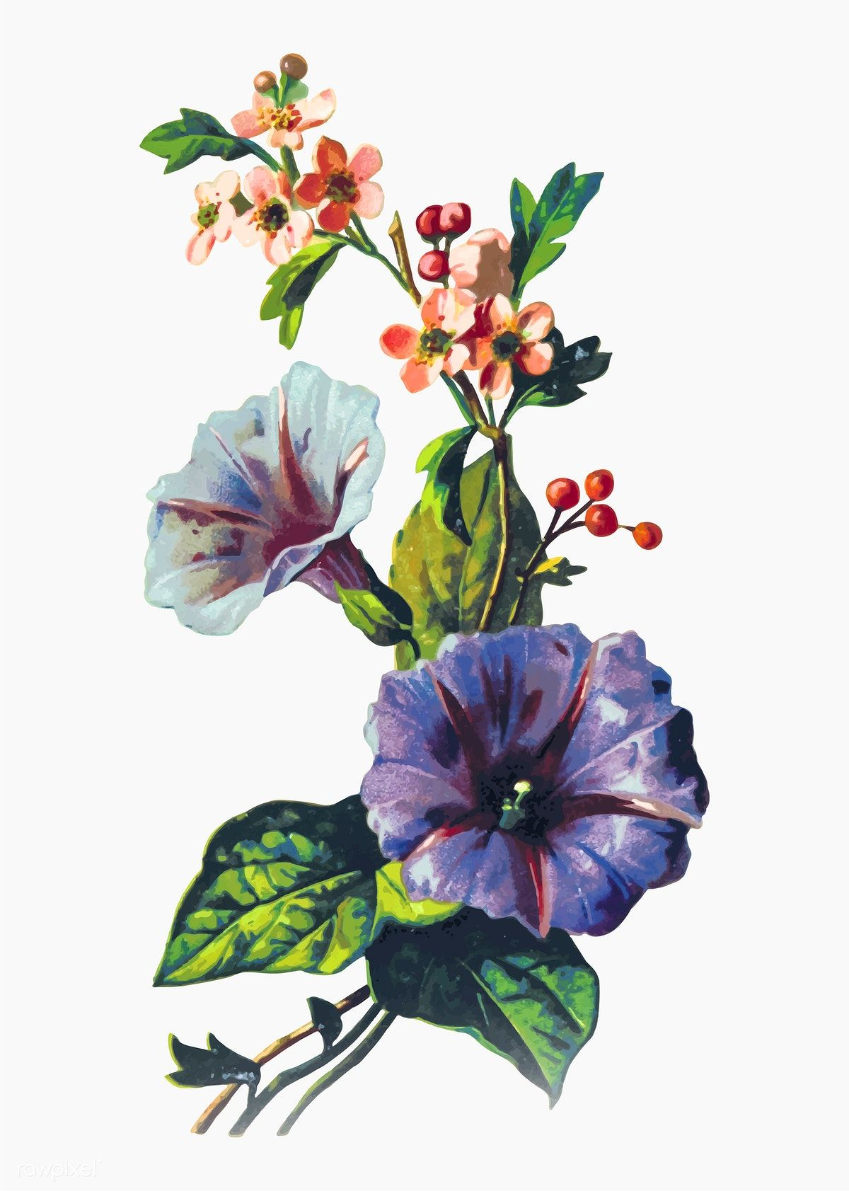 Drawing of mayflowers free image by Plant