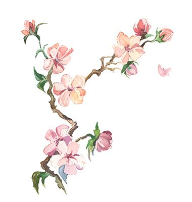 Spring Flowers Watercolor Isolated Vector By Lauralis Image