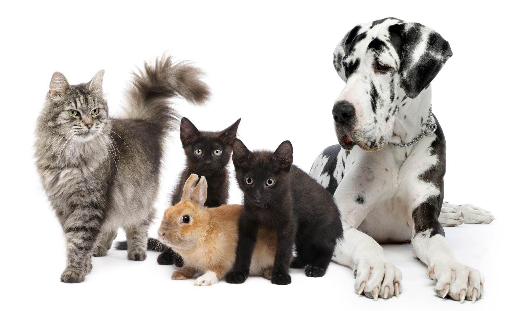 Pets Animals Animal Scents Essential Oils Animals Animals And Pets