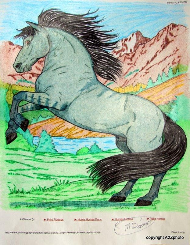 Dover Publications Wonderful World Of Horses Coloring Book Nature Amazon