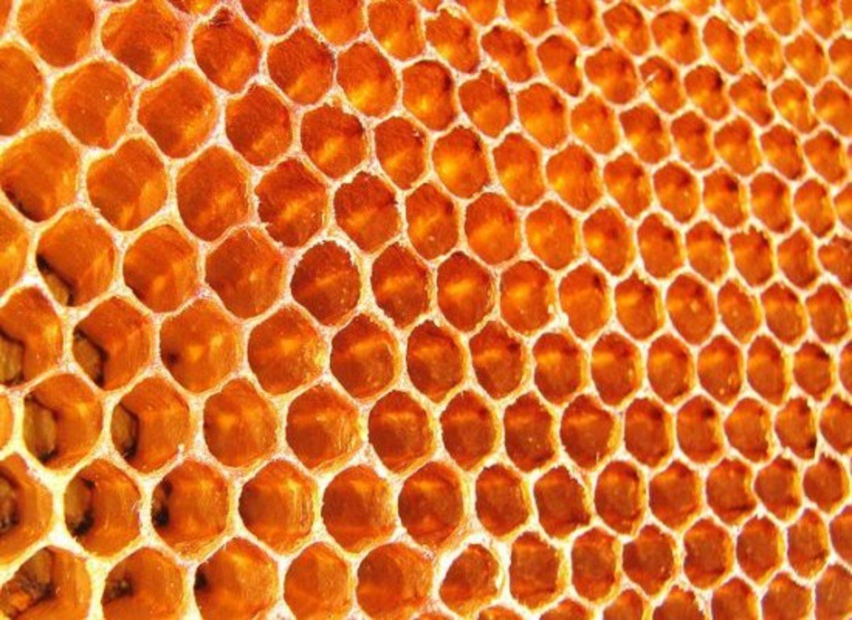 A is a repeated pattern of hexagons skin