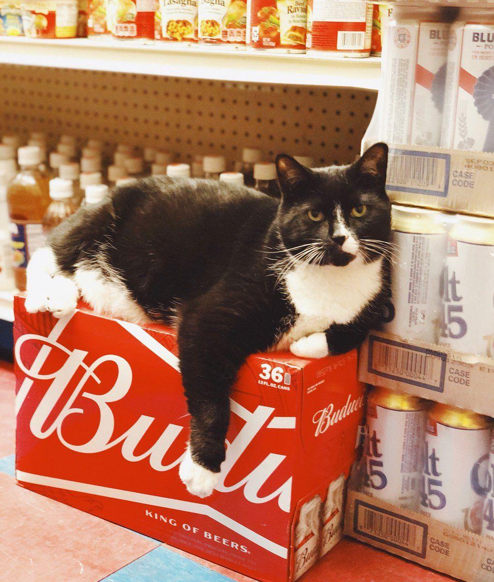 Bodega Cats BodegaCats_ on Twitter Bodega cat, Cats