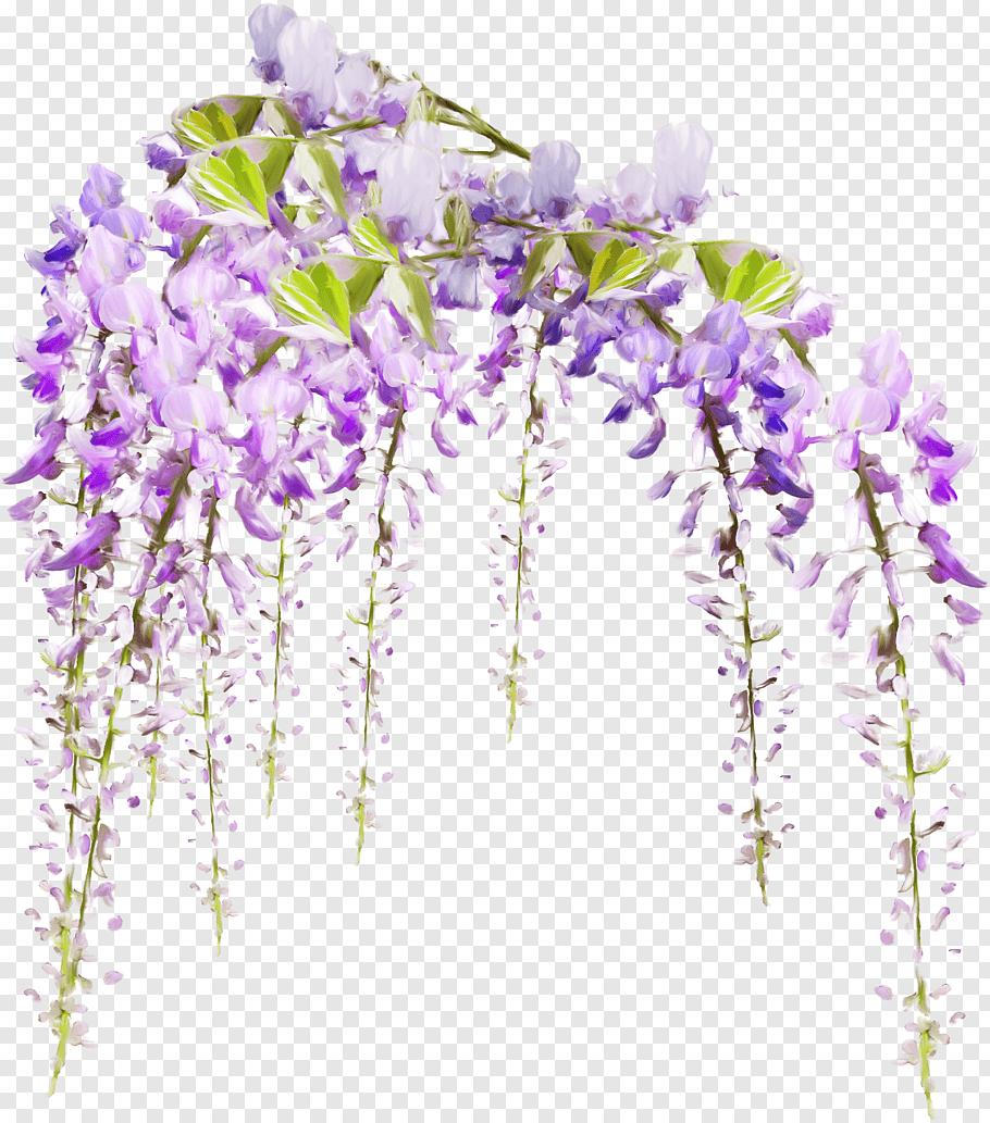 Purple Petaled Flowers Computer Software Sticker Raster Graphics Editor Wisteria Free Png In 2020 Purple Flowering Tree Flower Illustration Pink Spring Flowers