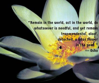 beautiful lotus flower quotes  enkiquotes in 2020  lotus