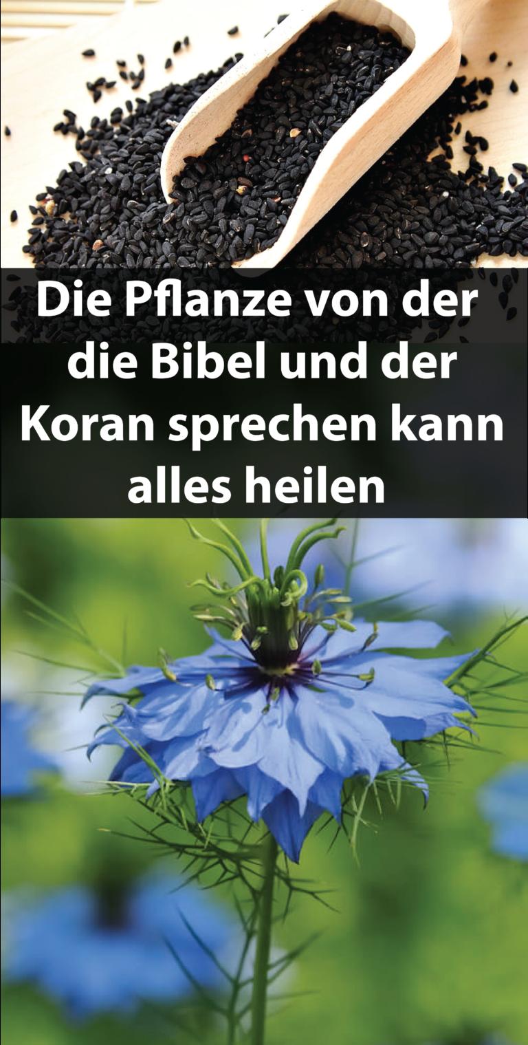 Bildergebnis für DIE PFLANZE VON DER DIE BIBEL UND DER KORAN SPRECHEN KANN ALLES HEILEN!