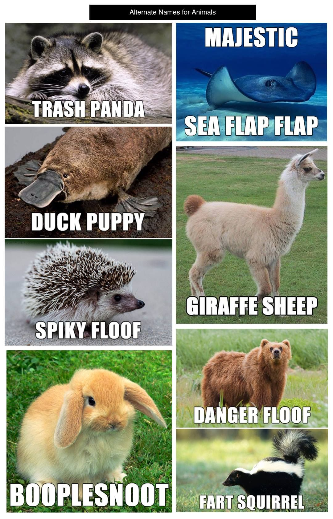 I have no words.... Funny animal names, Funny animal