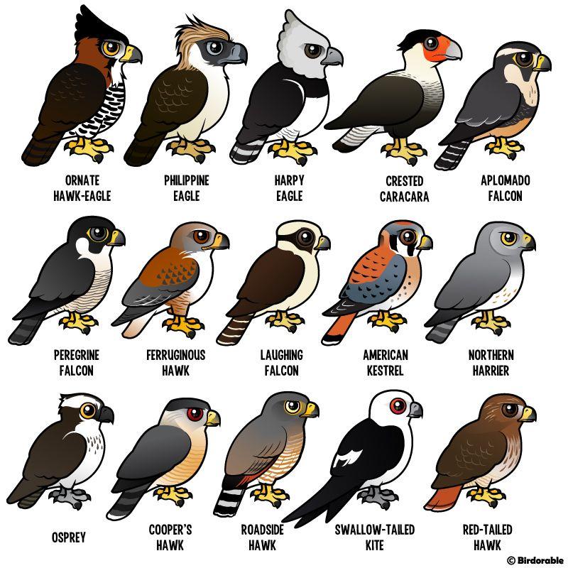 List Of All Cute Birdorable Birds Animals Cute Animals Cartoon Animals