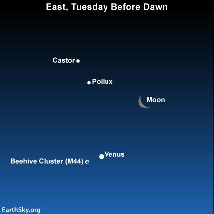 Moon, twin stars, two dazzling planets before dawn September 11 #Tonight