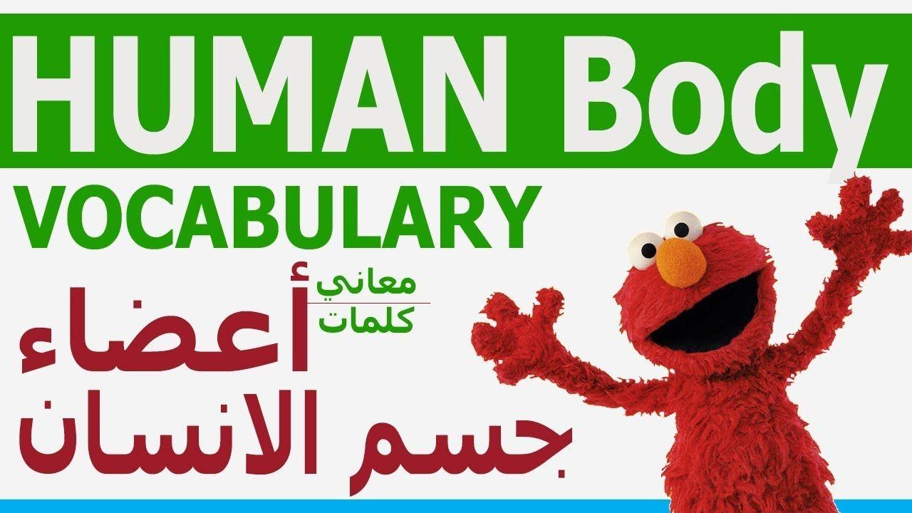 تعلم كلمات انجليزي Human Body Vocabulary مصطلحات جسم الانسان عربي انجليزي Learn English Youtube Human Body Vocabulary Vocabulary Human Body