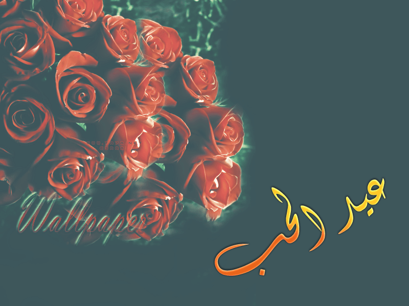 اجمل وردة عيد الحب 2016 احلى ورده في عيد الحب Art Movie Posters Poster