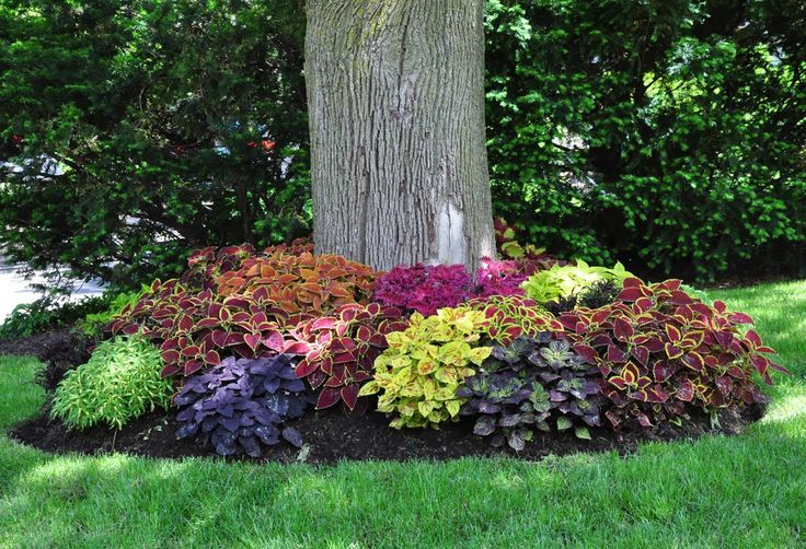 Arriate con c leos de diferentes colores jardines for Diferentes jardines