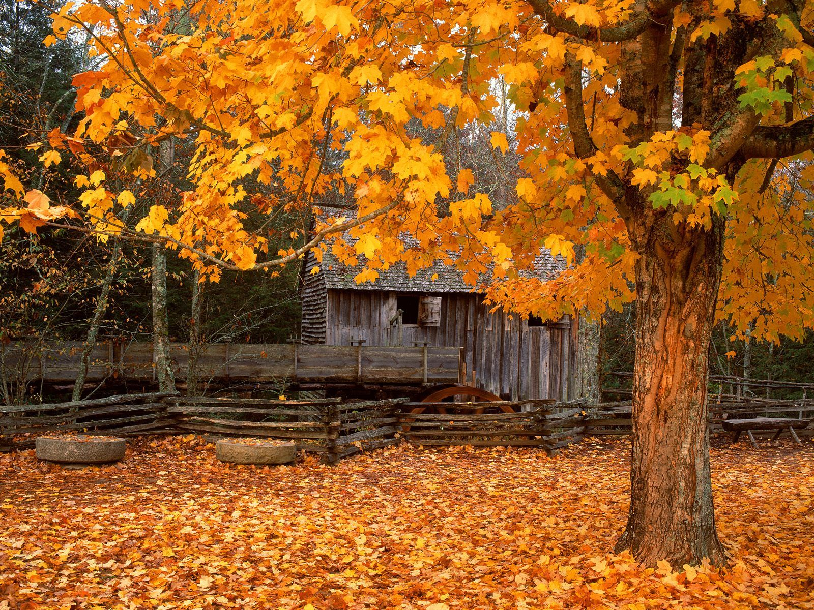 Cades Cove Tn In The Fall Smoky Mountains Fall Wallpaper Autumn Scenery Beautiful Nature