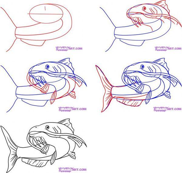 How To Draw A Catfish Cute Fish Drawings Drawings Fish Art