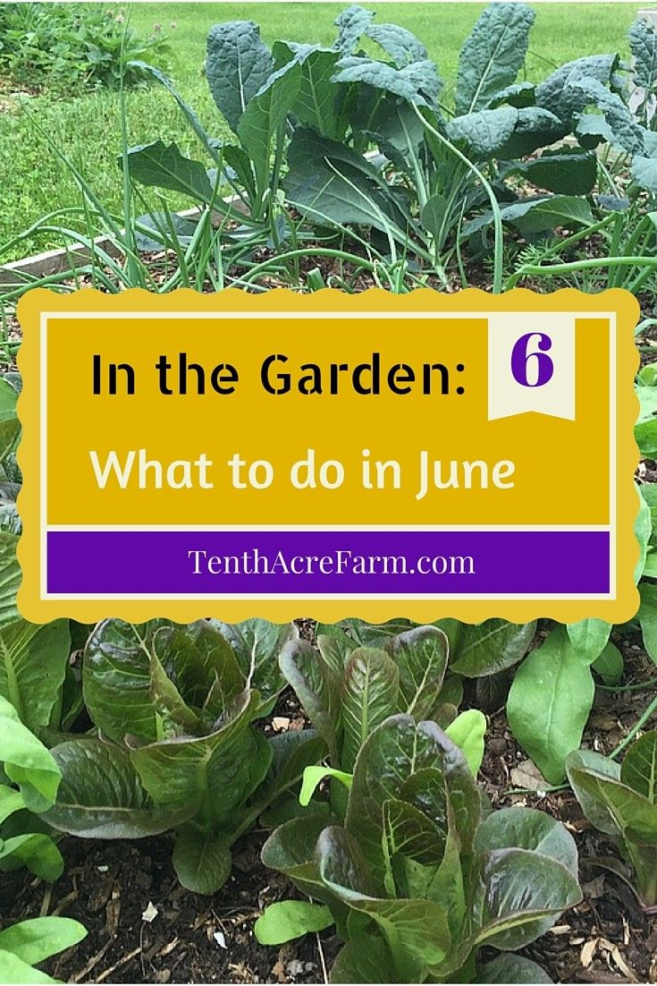 Summer is finally here and it's time to spend some time in the garden. Here are some ideas for prioritizing what to do in the garden in June to get on track.