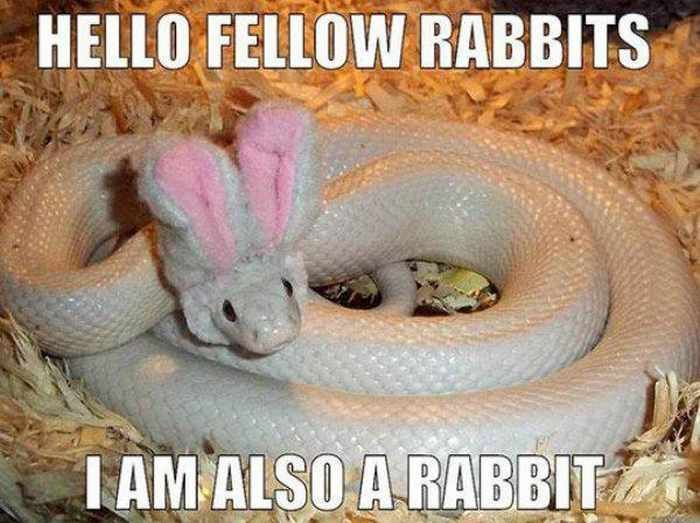 6ef98bd521f317649aec12f381f5d988 funny easter memes that will make your holiday 52 pics 21