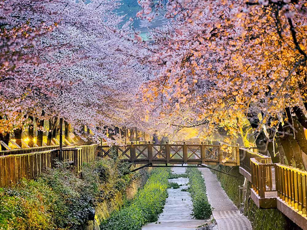 أجمل 15 مكان لرؤية أزهار الكرز سافر مع هوليداي مي Busan South Korea South Korea Cities In Korea