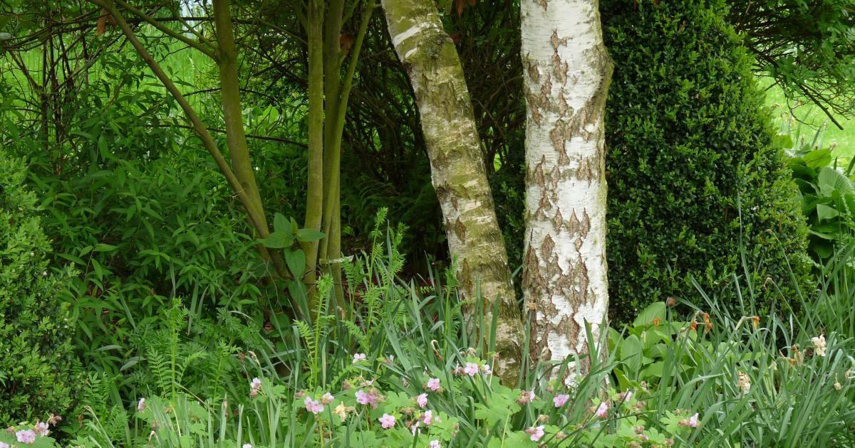 Stauden Für Den Trockenen Schatten   Garten Und Christlich Gartengestaltung Ideen Trockene Gebiete
