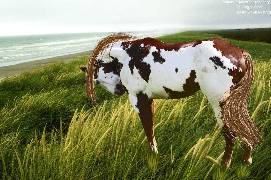 Paint Horse by ~Mystic-Spirit-Stock on deviantART | Paint ...
