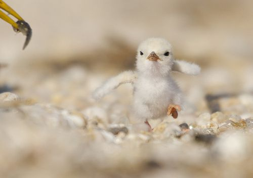 "baby animals | duckling | ""look mama, how i can run"""
