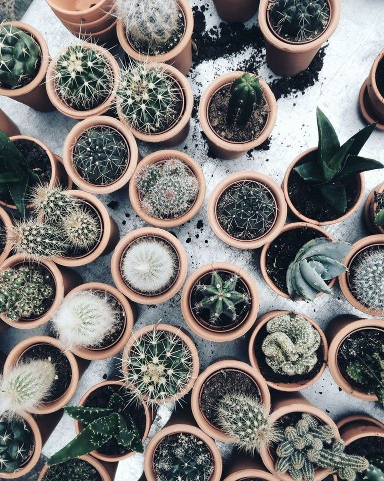 Photo of 25+ Beautiful Cactus Aesthetic Ideas The older leaves have been observed at the …