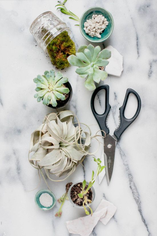 Terrarium Supplies for Modern Terrarium Studio Book, Photography by Michelle Smith, Authored by Megan George