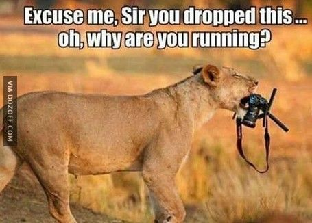 Why are you running..