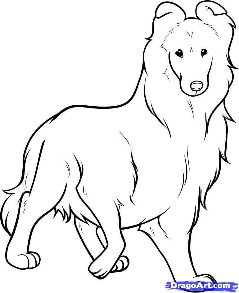картинки по запросу щенок колли раскраска животные колли