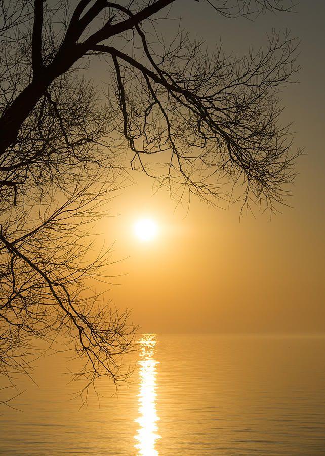 mistymorningme:  Framing The Golden Sun