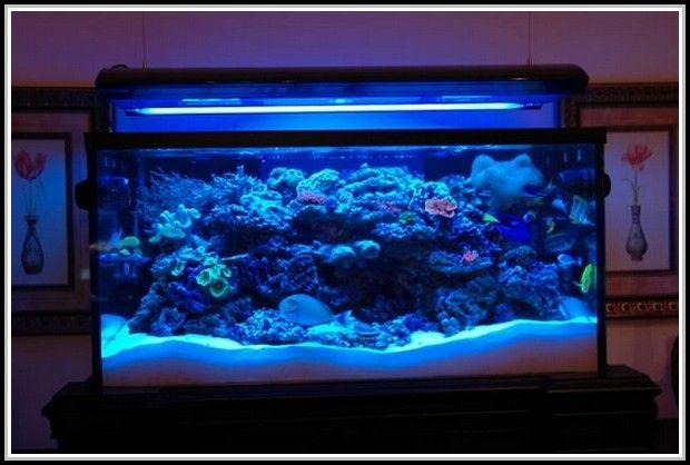 Aquarium Led Lighting Moonlight  sc 1 st  Pinterest & Aquarium Led Lighting Moonlight | Light Fixtures | Pinterest ...