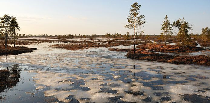 Hirvisuon soidensuojelualue - Luontoon.fi