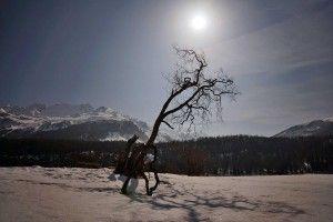 Der Baum am Silsersee im Licht der partiellen Sonnenfinsternis am 20.03.2015  #Silsersee #Engadin #Sils Maria