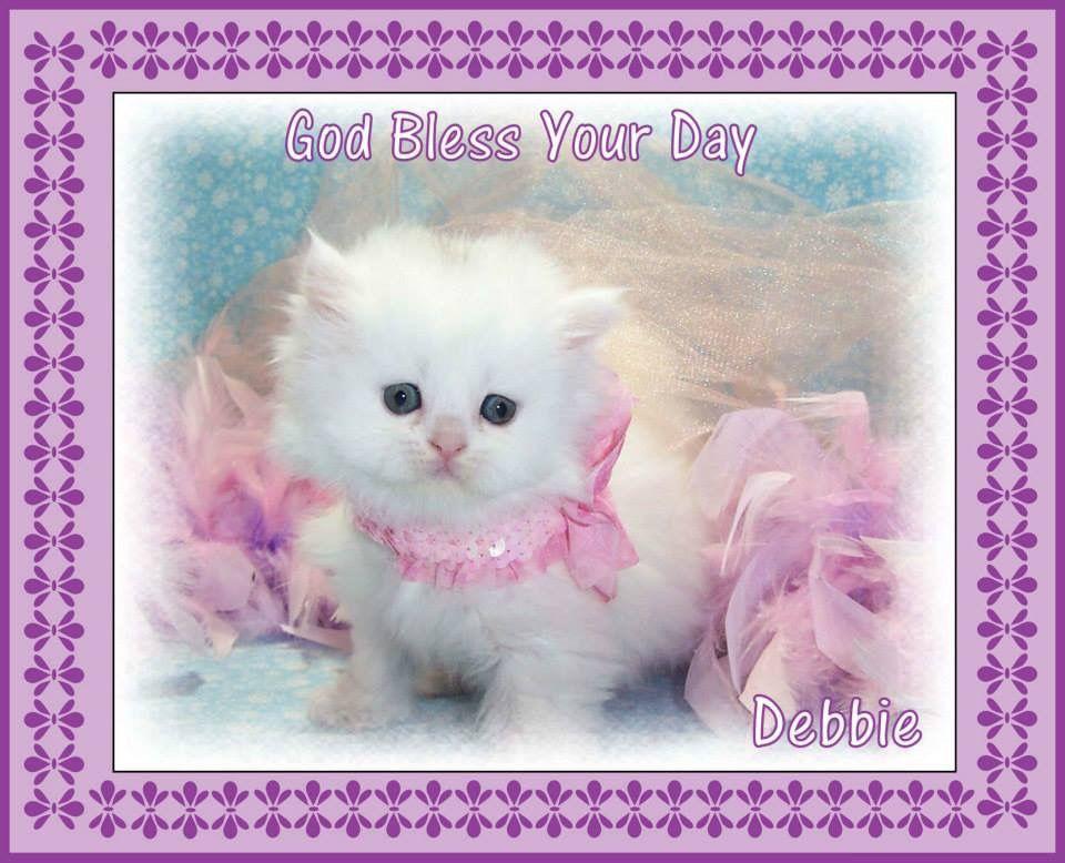 Pin By Mombhm On Welcome To My Boards Kitten Wallpaper Kittens