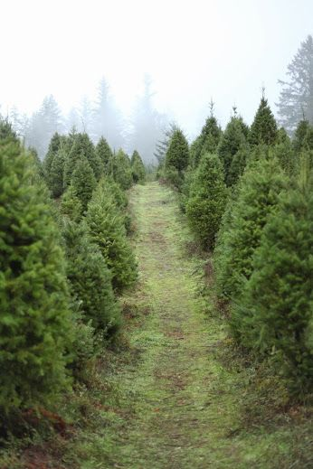 looking for that perfect christmas tree santas tree farm and village in half moon bay