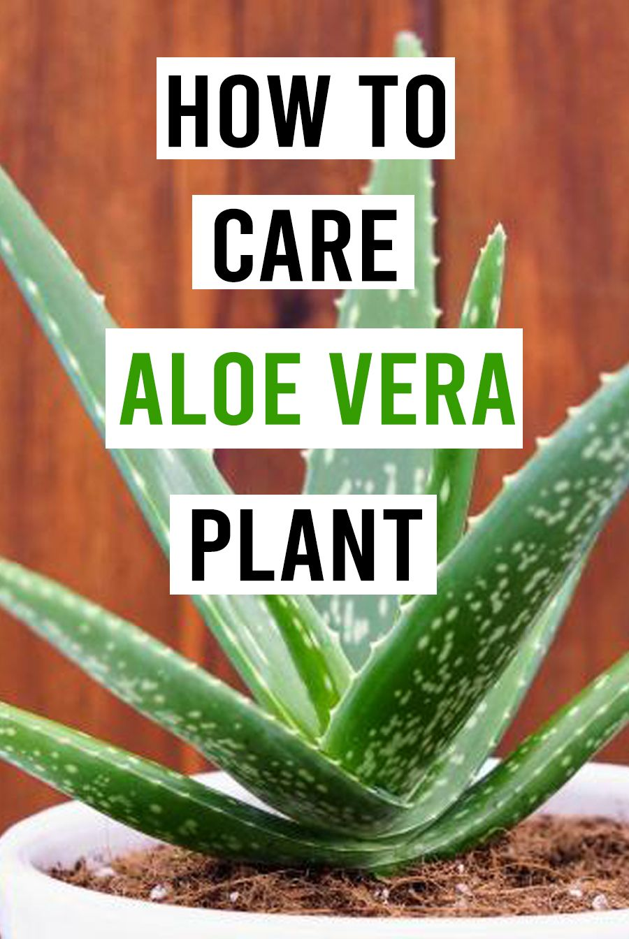 How To Take Care Of Aloe Vera Aloe Vera Plant Care The Ultimate Guide For A Way To Grow Aloe Vera Aloe Vera Plant Aloe Vera Aloe Plant