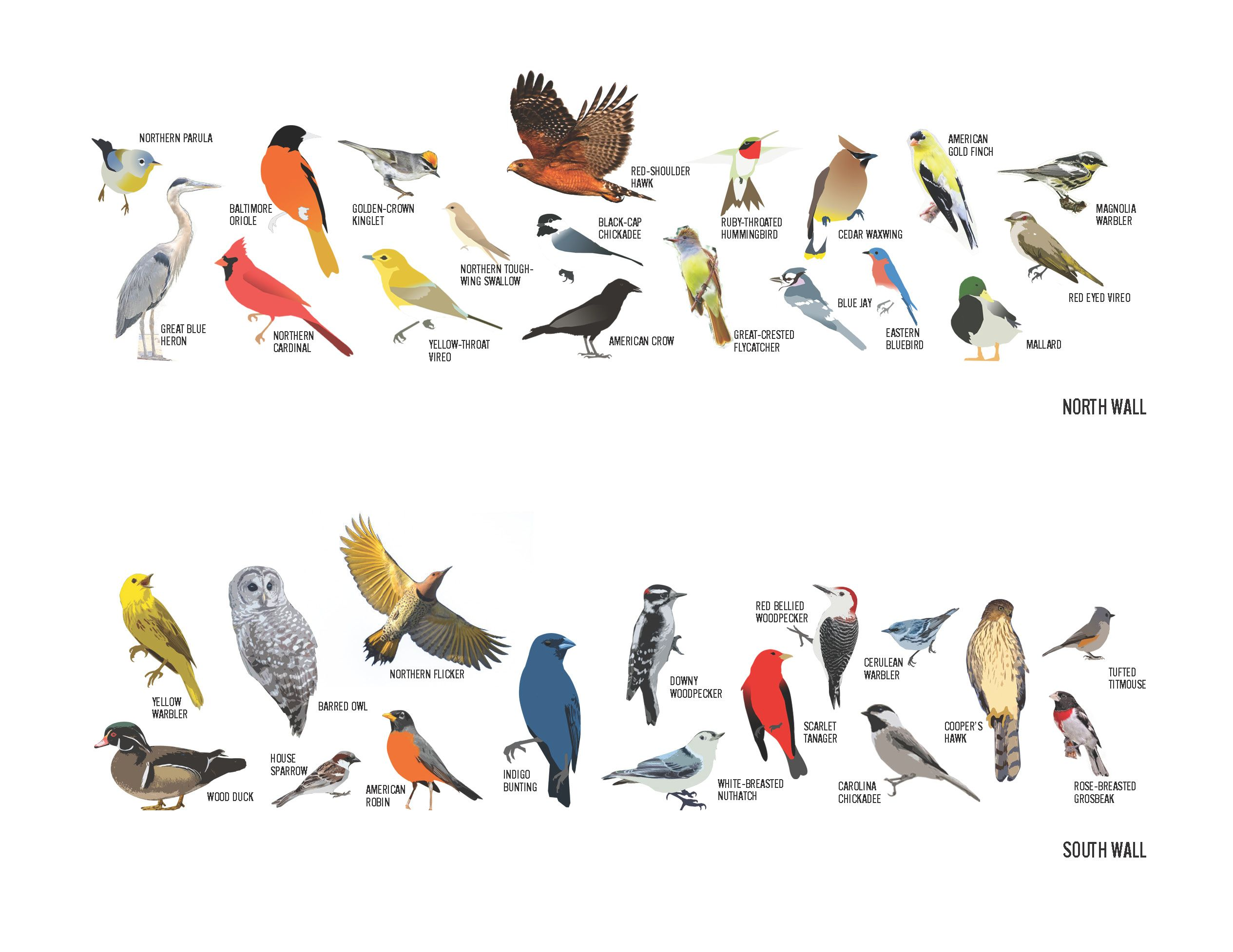 Reference For Bird Painting Birds Pictures With Names Bird Pictures Bird Identification