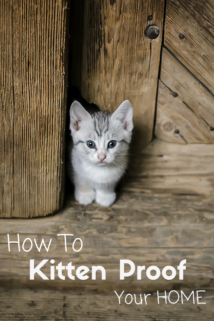 When You Have A New Kitten Your Priority Is To Keep Her Safe Follow These Simple Steps To Make Your New Cat Feel Safe A Kitten Proofing Kitten Care Cat Care